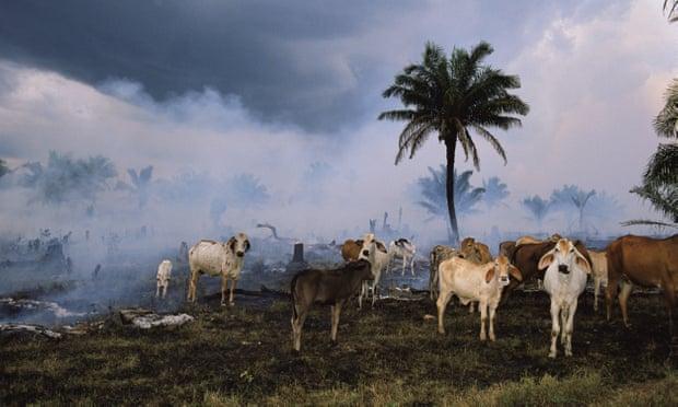 Od roku 1970 lidstvo vyhubilo 60% volně žijících živočichů